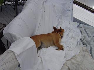 Lazy Dog | organizingmadefun.com