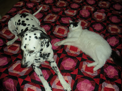 Dalmations As Pets. One of our host#39;s Dalmations