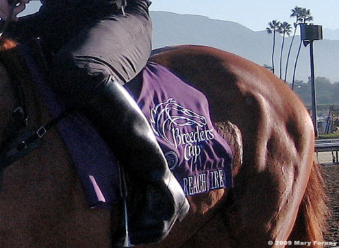 Breeders Cup saddlecloth