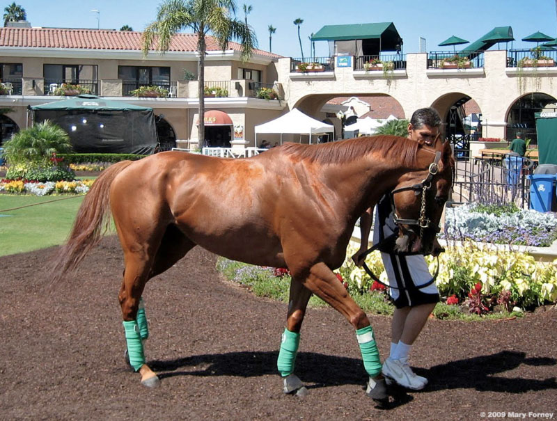 Maui Mark Del Mar paddock