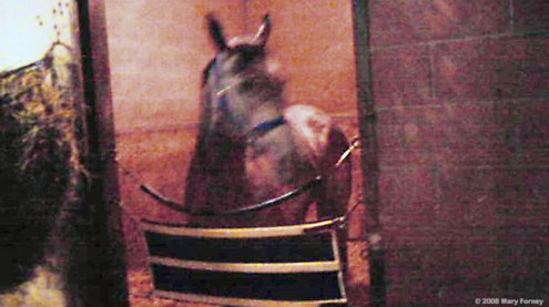 Indyanne in her stall