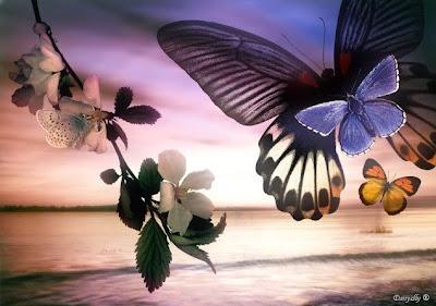 mar,borboletas,flores