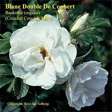 Blanc Double De Coubert