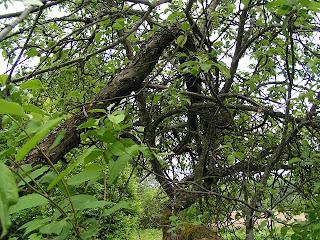 Omenapuutaidetta