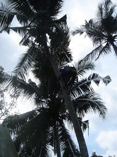 kokospalmen bij Villa Sabandari, een hotel met rice field views vlakbij Ubud, Bali