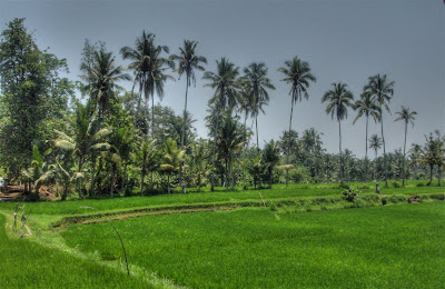 Rice field view from Villa Sabandari, one of the luxury holiday hotels in Ubud, Bali