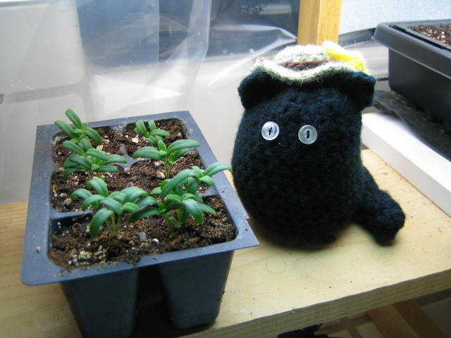 Farmcat in the greenhouse