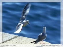 to thejonathan livingston seagull which lives in all of us!!!!
