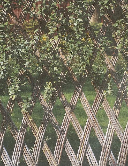 Paradise backyard mati res de jardin for Jardines de poni