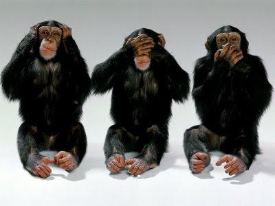 monkeys cover their eyes