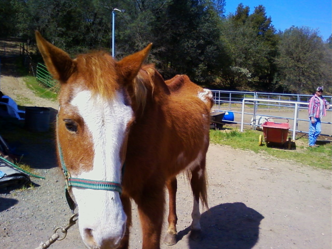 Safe Haven Horse Rescue Journal: Another EMACIATED MARE!!! DEENA