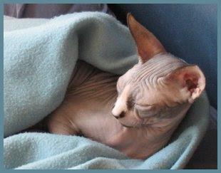 Dragonheart cozy in fleece