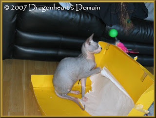 Dragonheart playing in his yellow box
