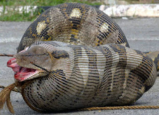 hope from now on TITANOBOA haunts everybodys Dream ☺