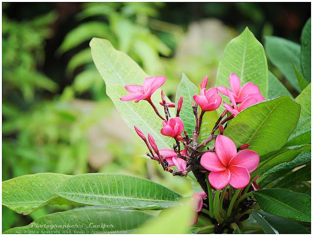 Camera Photo Bangkok Thailand
