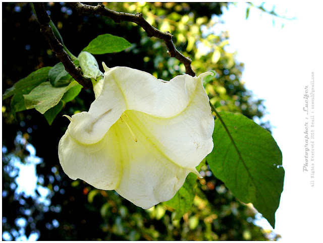Camera Photo Flower