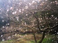 枝いっぱいに花つけて…