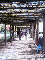 名城公園 九尺藤棚を歩く