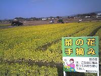 花摘み自由!