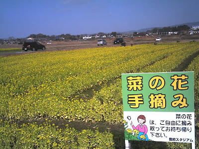 豊田スタジアムの菜の花畑