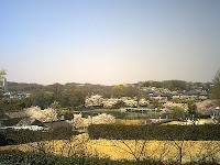 展望台からサクラ咲く新池を眺める