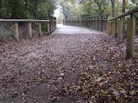 枯葉散る木道