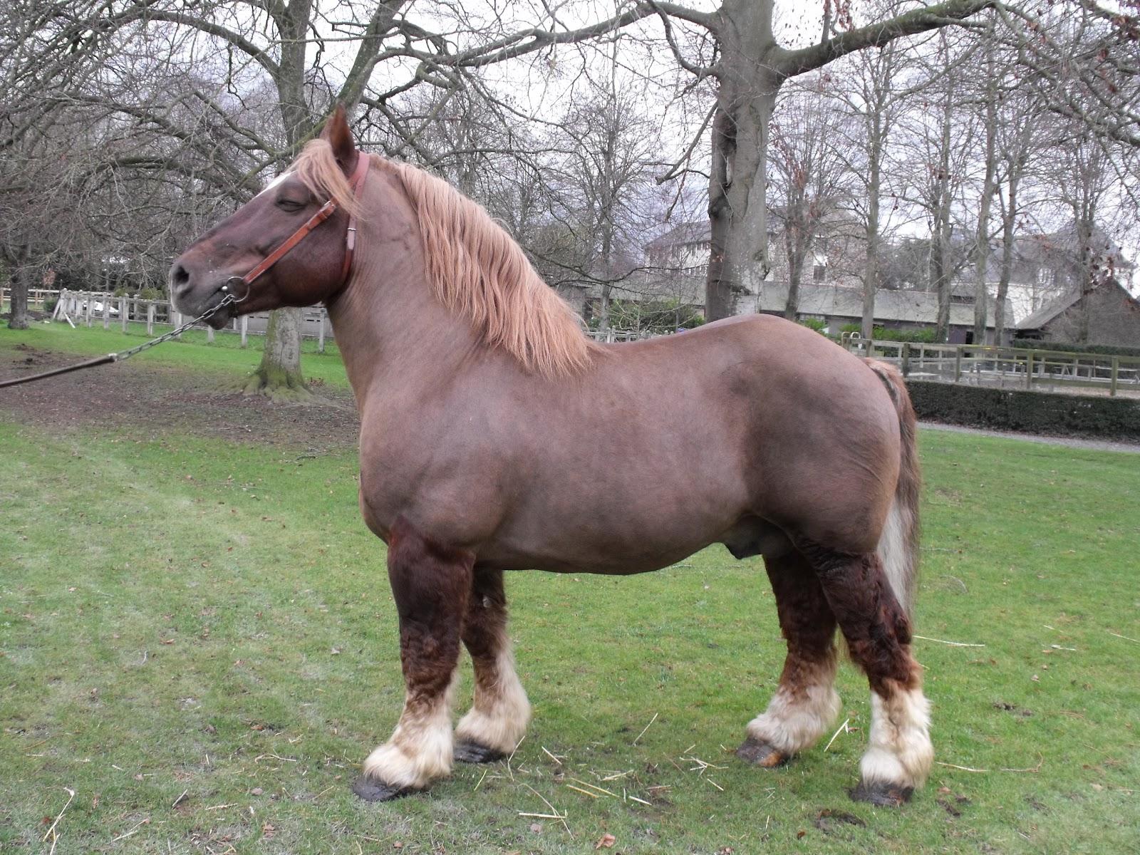 Legta de guingamp kernilien mil cheval de trait breton for Jardin anglais guingamp
