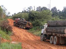Extração ilegal de madeira
