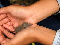 Musaranya a les mans d'uns joves caminants