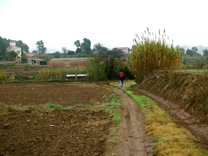 Horts i conreus a la zona del Joncar