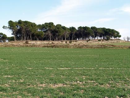 El Bosc Espès