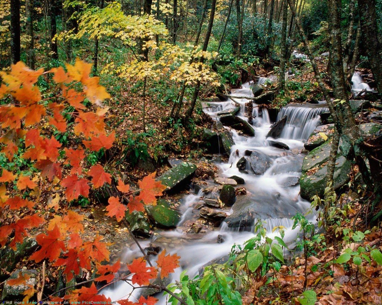 http://4.bp.blogspot.com/__c9qWlUD8Qs/S8N9VNa6oPI/AAAAAAAAFaw/YCkM_QHPcaY/s1600/Waterfalls+Wallpapers_15.jpg