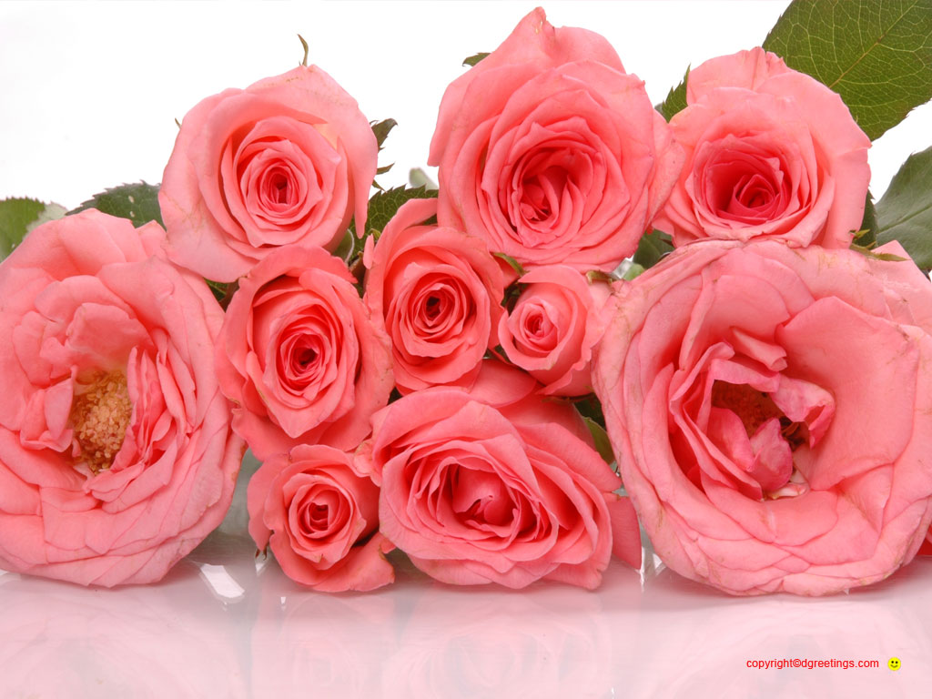 Valentine flower pictures beautiful flowers - Valentine s day flower wallpaper ...