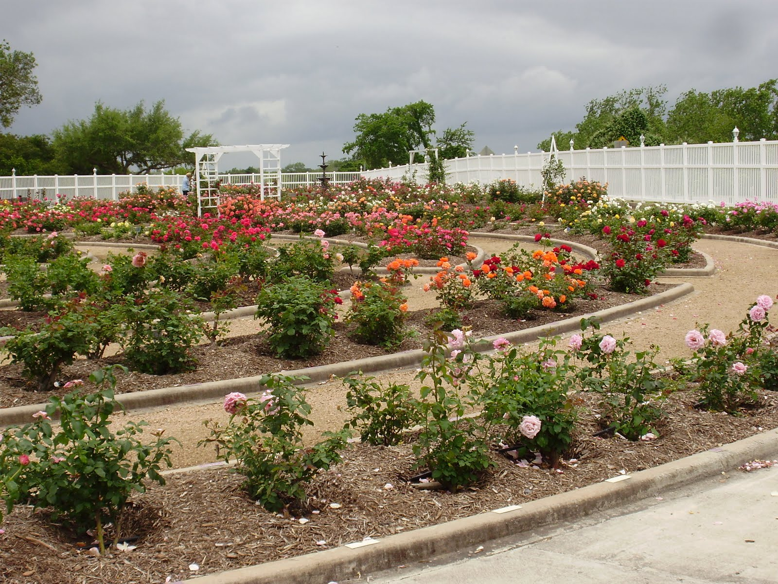Life at 55 mph: Rose Garden at the Riverside Park in Victoria, Texas ...