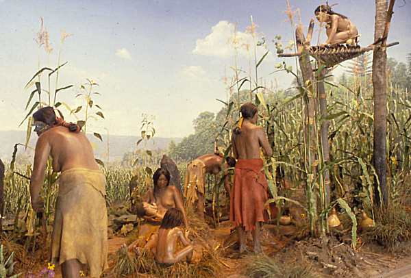 the history of new york city and the role of the algonkian and canargees indians in the city Search edit this page.