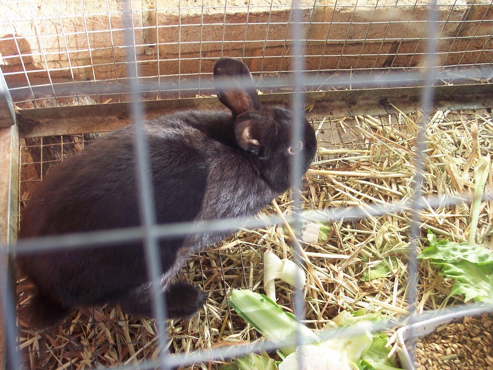 [aug+09+bunnies+007.jpg]