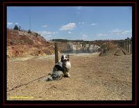 pastor australiano nas Minas de São Domingos