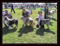 Exposição Canina de Lisboa com os Pastores Australianos