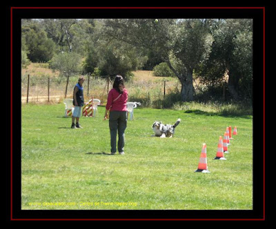 Centro de Treinos para cães no Algarve