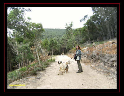 pastor australiano e golden retriever na serra de sintra