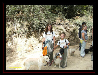 australian shepherd and golden retriever in serra de sintra