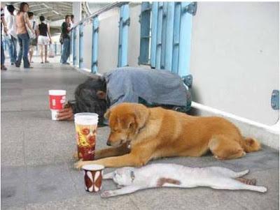 Crise económica e animais de estimação