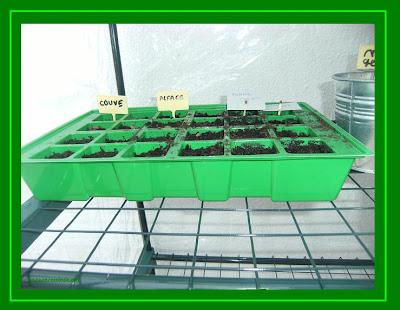 sementeira legumes