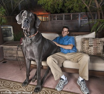 George, the world's tallest dog!!!
