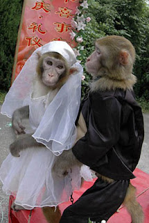 Monkey Marriage