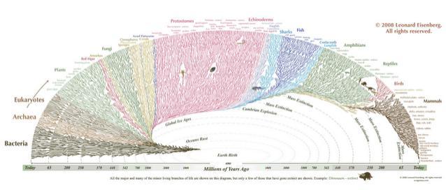 http://www.redditmirror.cc/cache/websites/www.evogeneao.com_8pp8o/www.evogeneao.com/images/Evo_large.gif