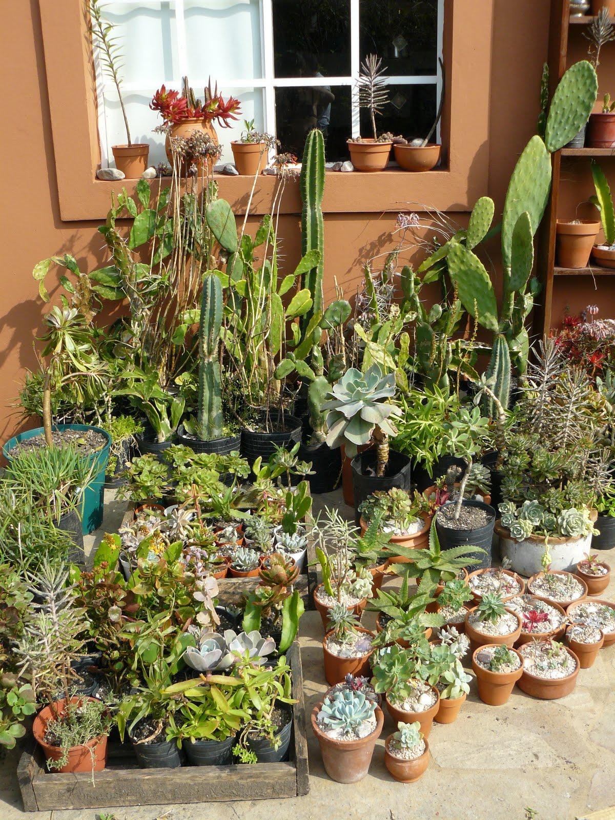 jardines de cactus y suculentas jardin en macetas