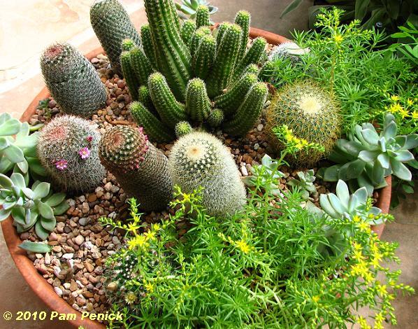 Jardines de cactus y suculentas peque o jard n en maceta for Jardines con cactus