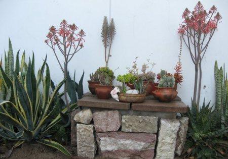 Jardines de cactus y suculentas jardin zen con suculentas for Jardines con cactus