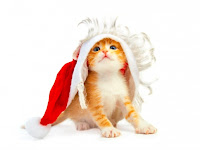christmas kitten wallpaper for desktops
